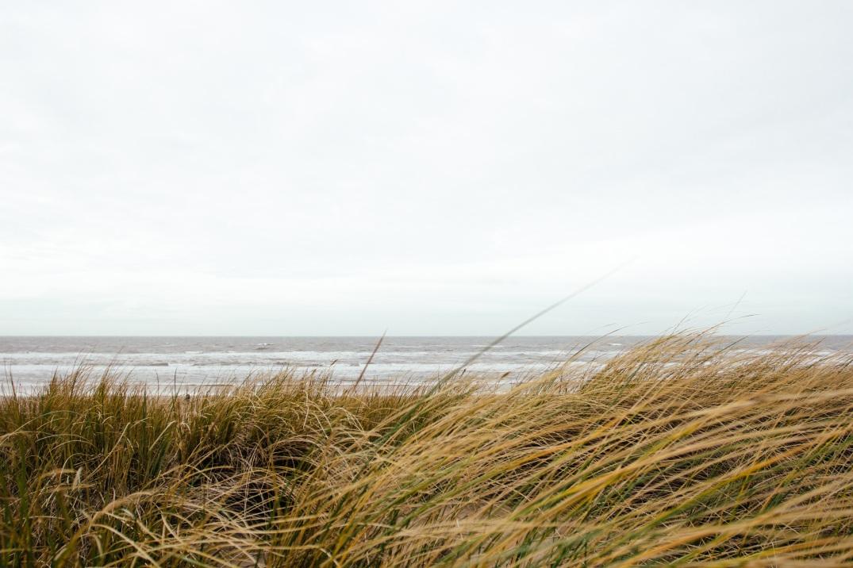 grass, yellow, horizon