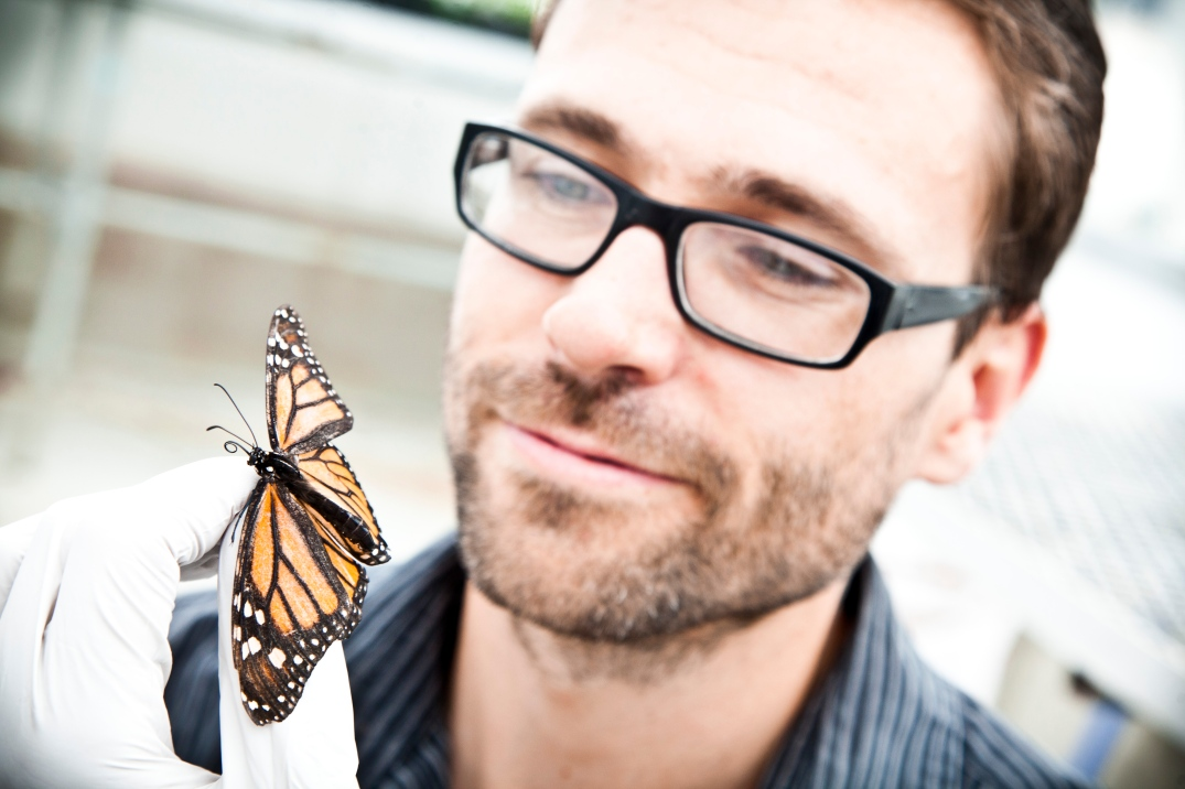Biologist Jaap de Roode studies the Monarch butterfly's ability to use medicinal plants. Photo: Courtesy of Jaap de Roode